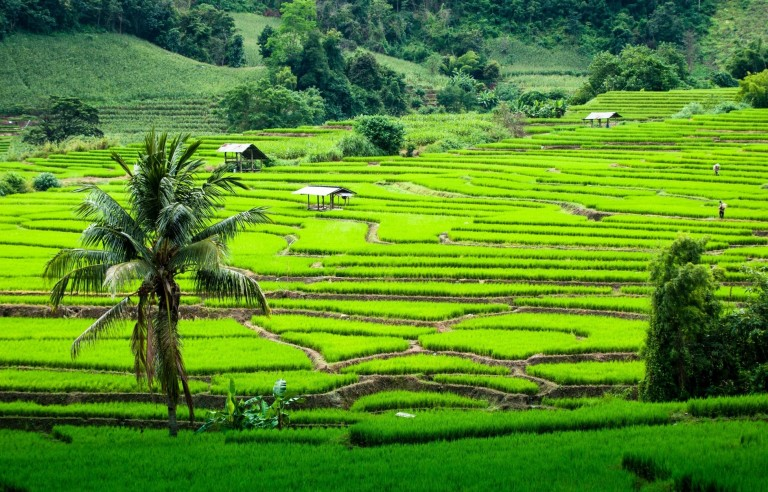 Chiang mai travel feature
