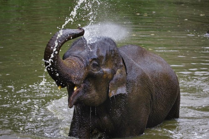 Thai Elephant Conservation Center lampang travel guide