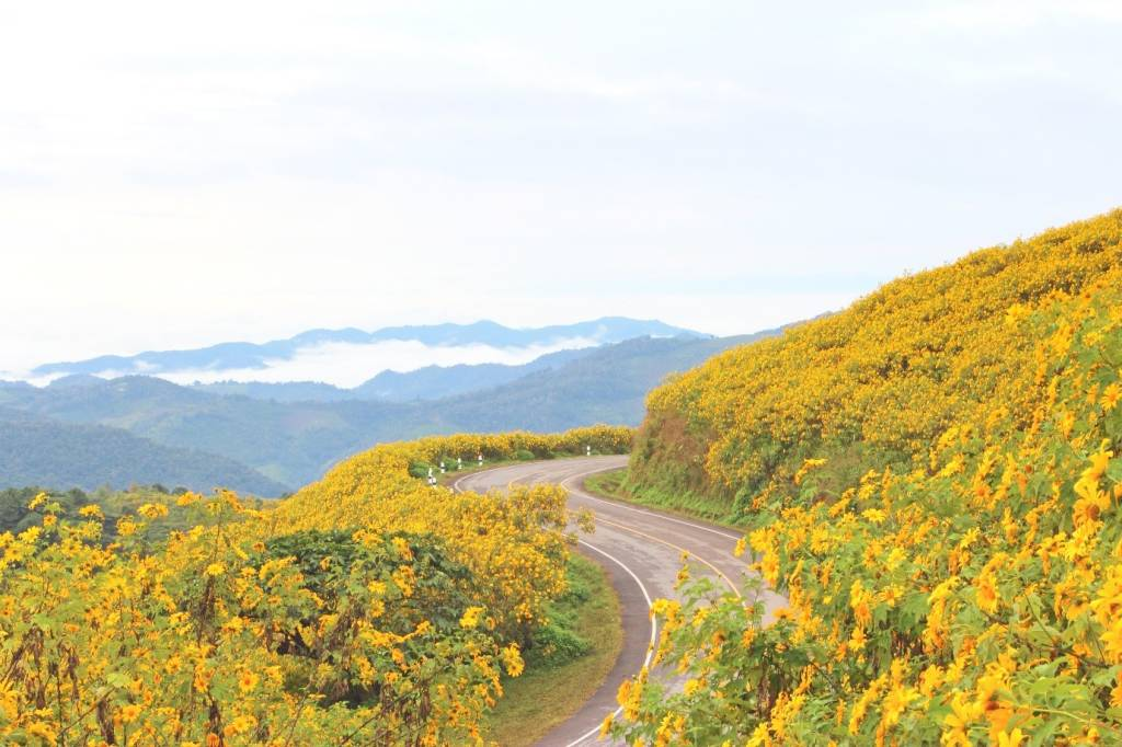 Where To Witness The Most Breath-taking Sunflower Fields In Thailand