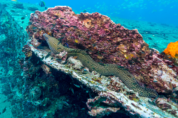 Experience Scuba Diving in Phuket: What to See and Where to Dive